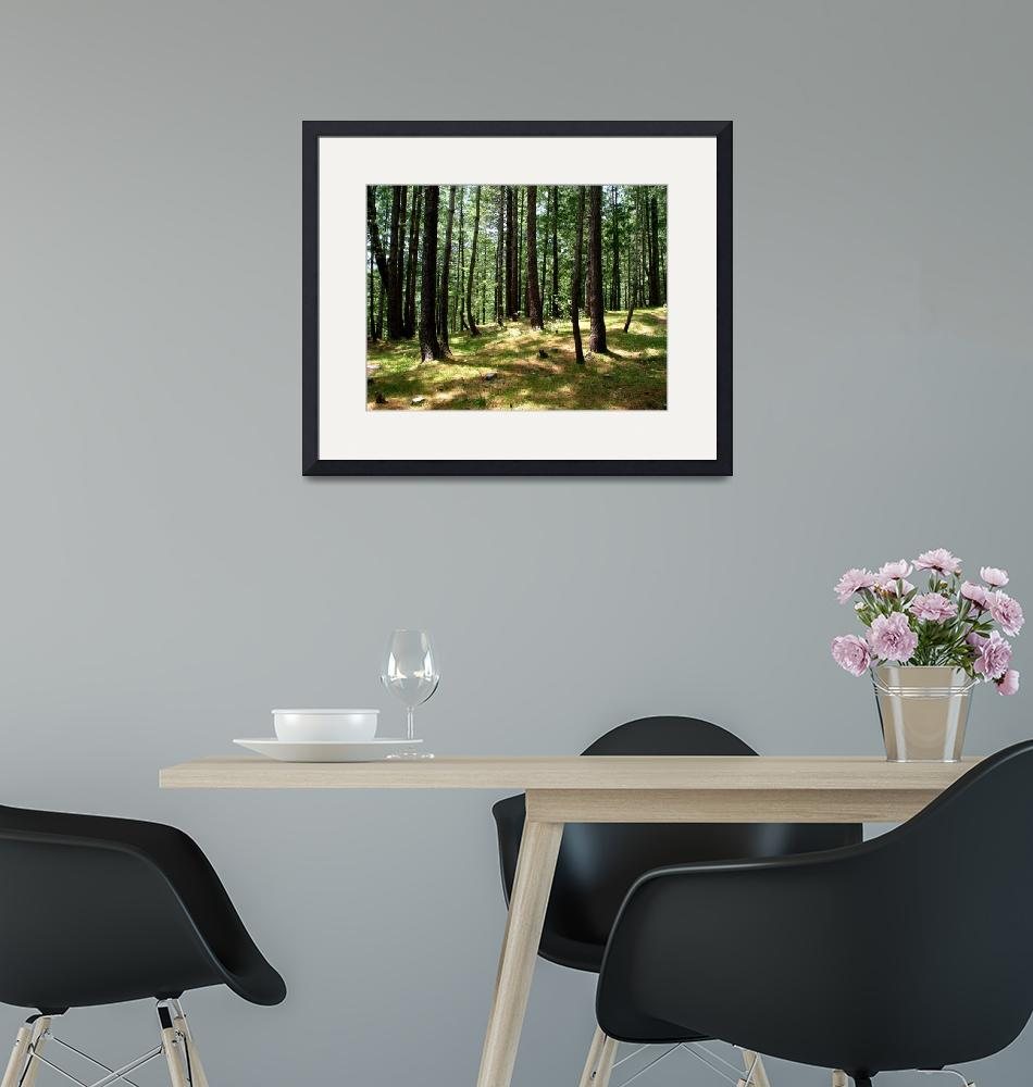 """""""Cool Pine Forests nathiagali IMG_900706""""  (2006) by davies"""