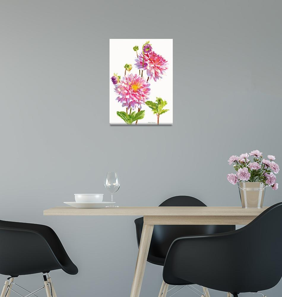 """""""Bright Pink Dahlias with Buds white backbground""""  (2016) by Pacific-NW-Watercolors"""