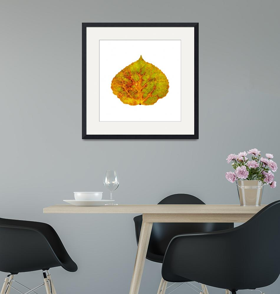 """""""Brown Green Orange Red and Yellow Aspen Leaf 1""""  (2014) by AgustinGobaFineArts"""