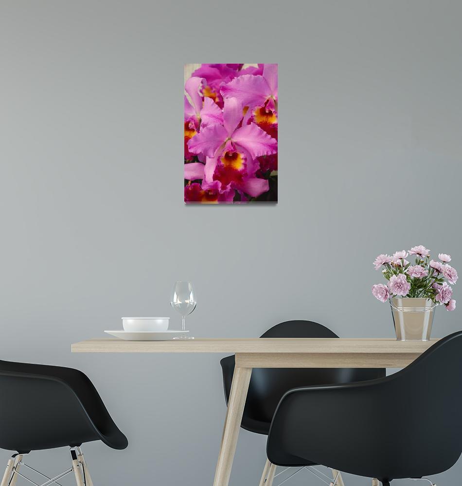 """Hawaii, Cluster Of Pink Cattleya Orchids""  by DesignPics"