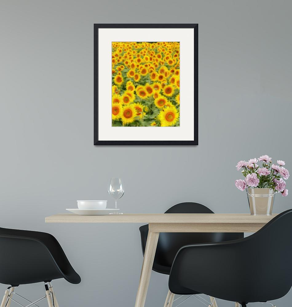 """Sunflowers 1620-300""  (2008) by johnrichardson"
