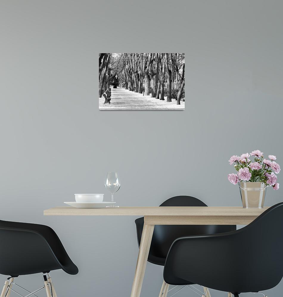 """Black and white 2""  (2009) by ionutignat"