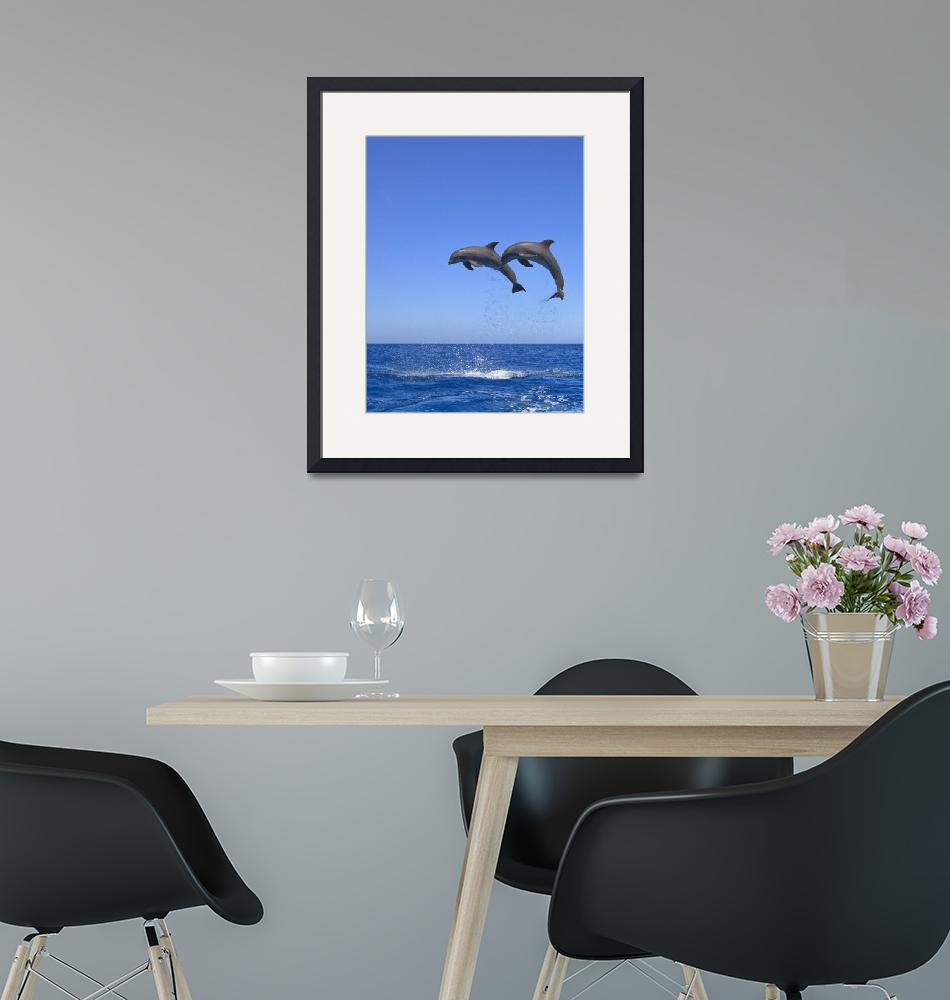 """""""Two Bottlenose Dolphins""""  by DesignPics"""