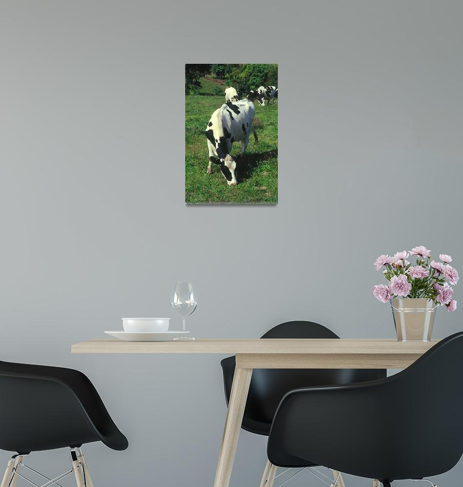 """Country Cow""  (2005) by photocatphoto"