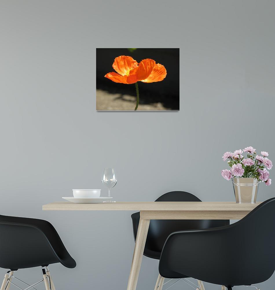 """Icelandic Poppy""  (2007) by hawksmom"