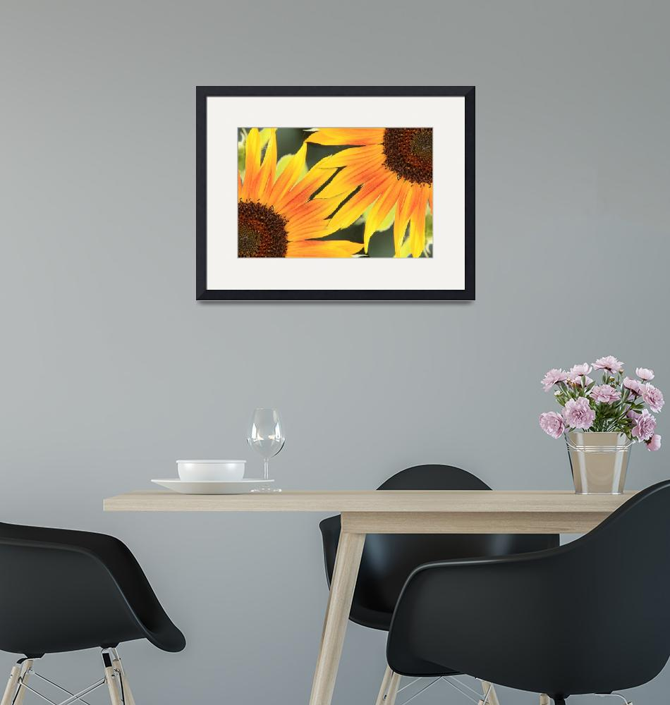 """Sunflower On the Corner""  (2010) by lightningman"