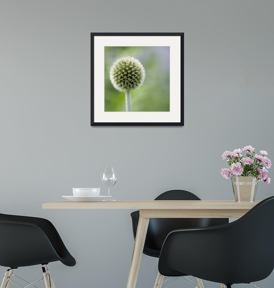 """""""Seed head"""" by LindaScannell"""