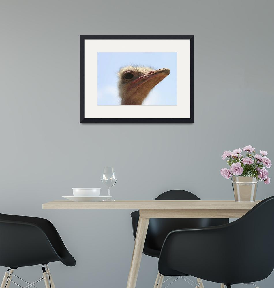 """""""head of an Ostrich""""  (2005) by PhotoStock-Israel"""