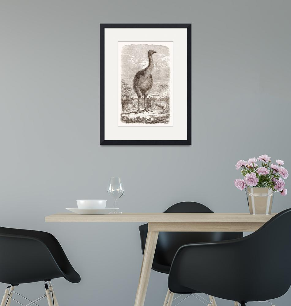 """""""Moa Dinornis (extinct animal of New Zeland)""""  by CBimages"""