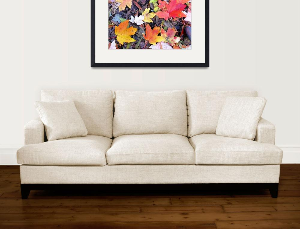 """""""Autumn Maple leaves&quot  (2011) by biriart"""