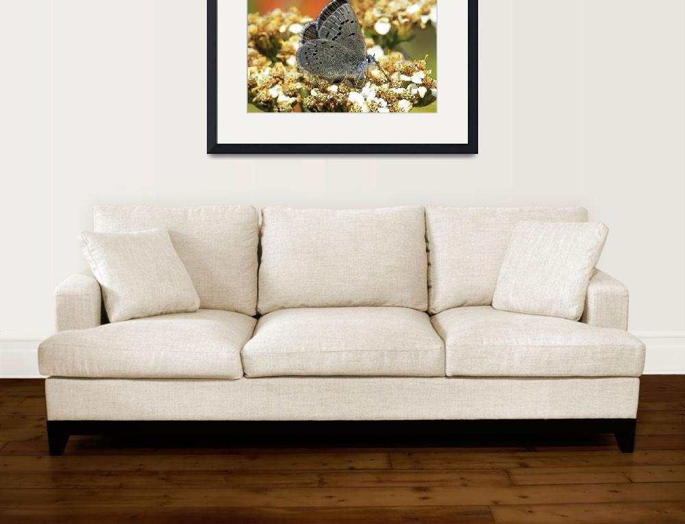 """Butterfly Love Collection (2 of 7)&quot  (2012) by WallArtDeco"