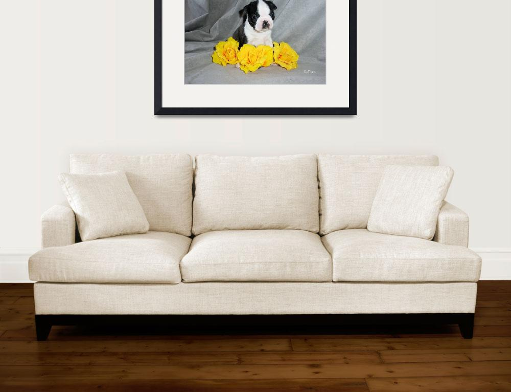 """""""Boston Terrier Puppy With Yellow Roses&quot  (2004) by ACuteProduction"""