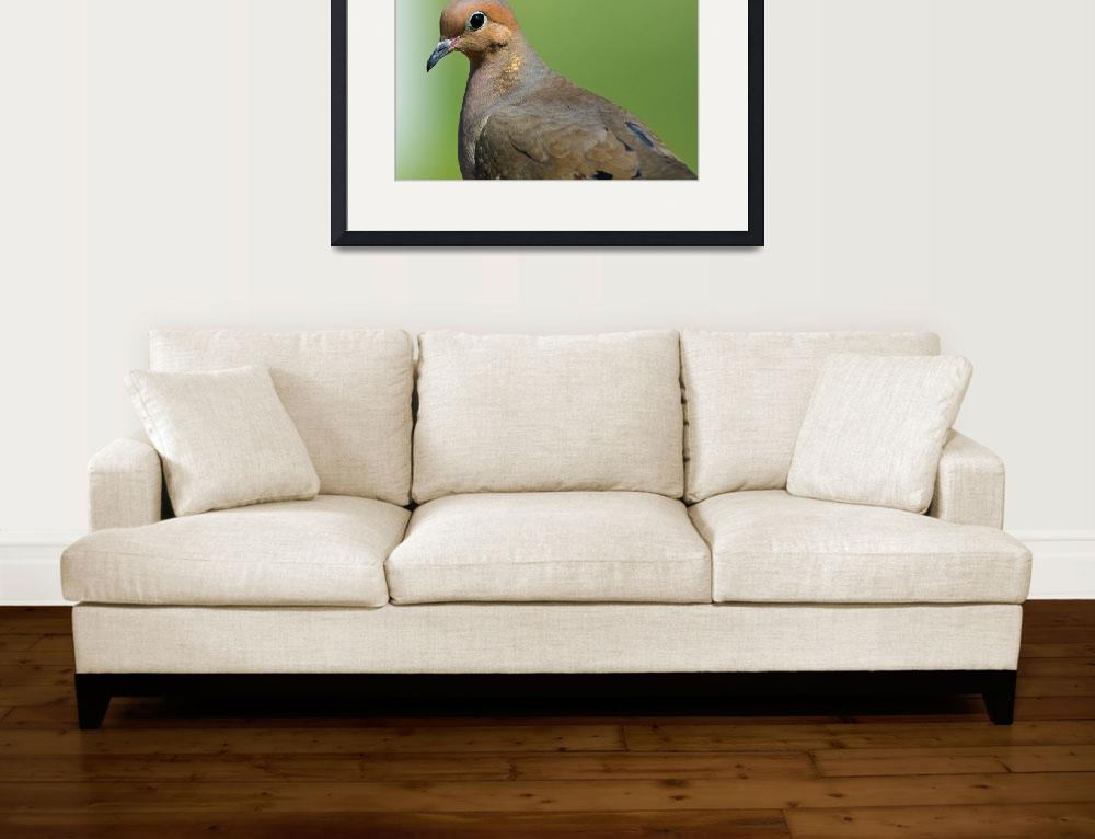 """""""Mourning Dove&quot  by tricia"""