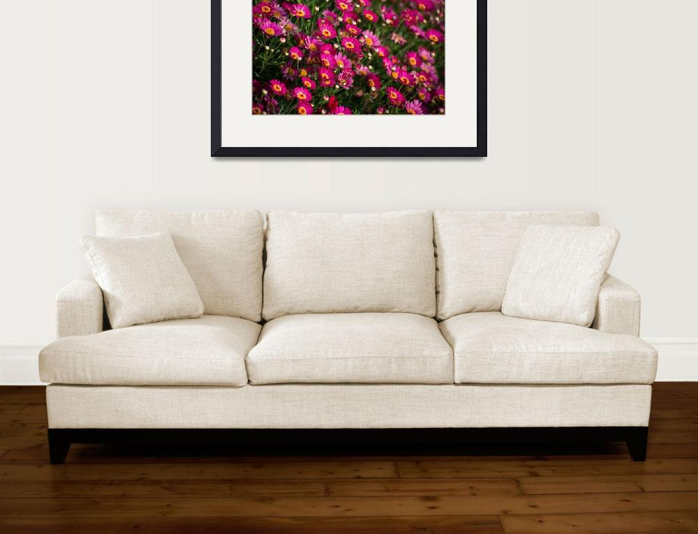 """""""Bright Pink Marguerite Daisies&quot  (2017) by LynnBauer"""