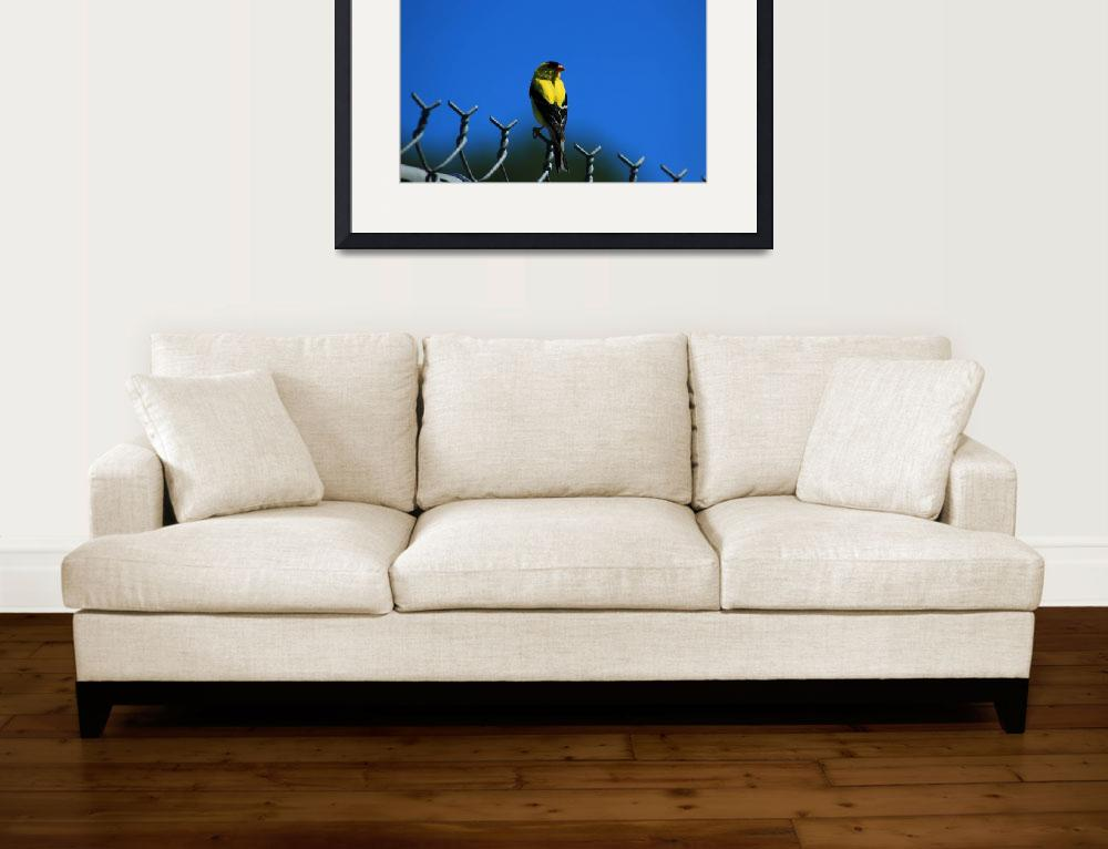 """""""American Goldfinch on a Fence&quot  (2015) by rhamm"""