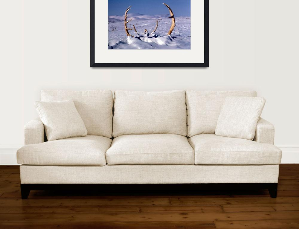 """""""Caribou Antlers in The Snow&quot  by Alleycatshirts"""