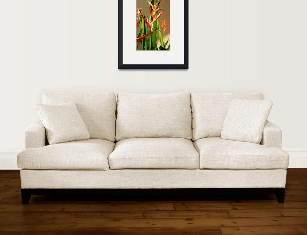"""Lady Di - Heliconia&quot  (2009) by rayjacque"