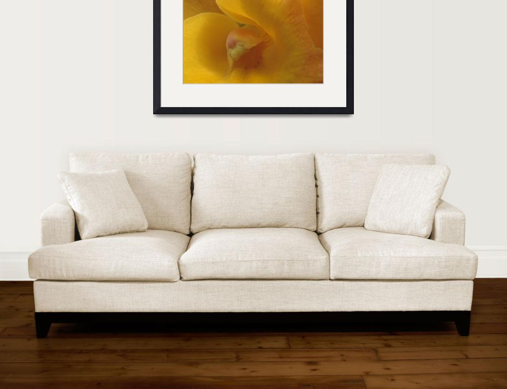 """""""Yellow Orchid""""  by TerryCrain"""