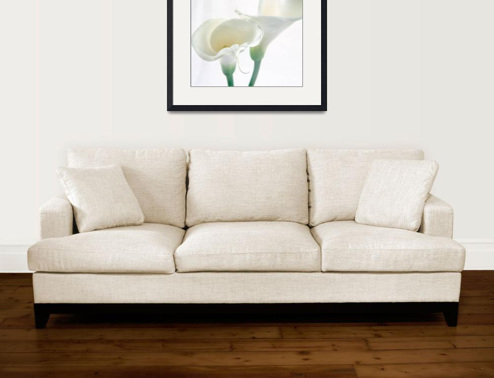 """""""Calla Lilly 3""""  (2006) by AnnaMiller"""