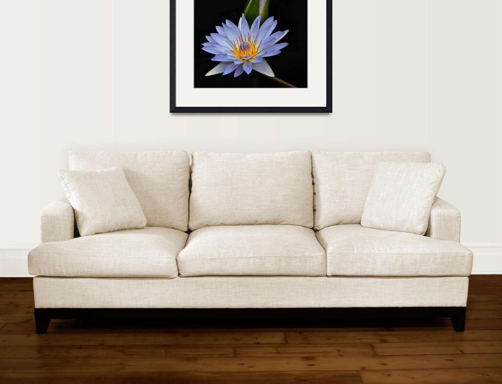 """""""Waterlily Flower And Bud&quot  (2011) by LightHeart"""