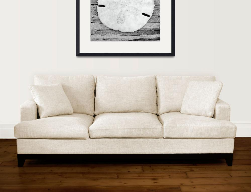 """""""Sand Dollar&quot  (2003) by christographer"""