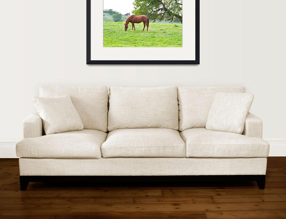 """""""Grazing Horse&quot  (2013) by calphy"""