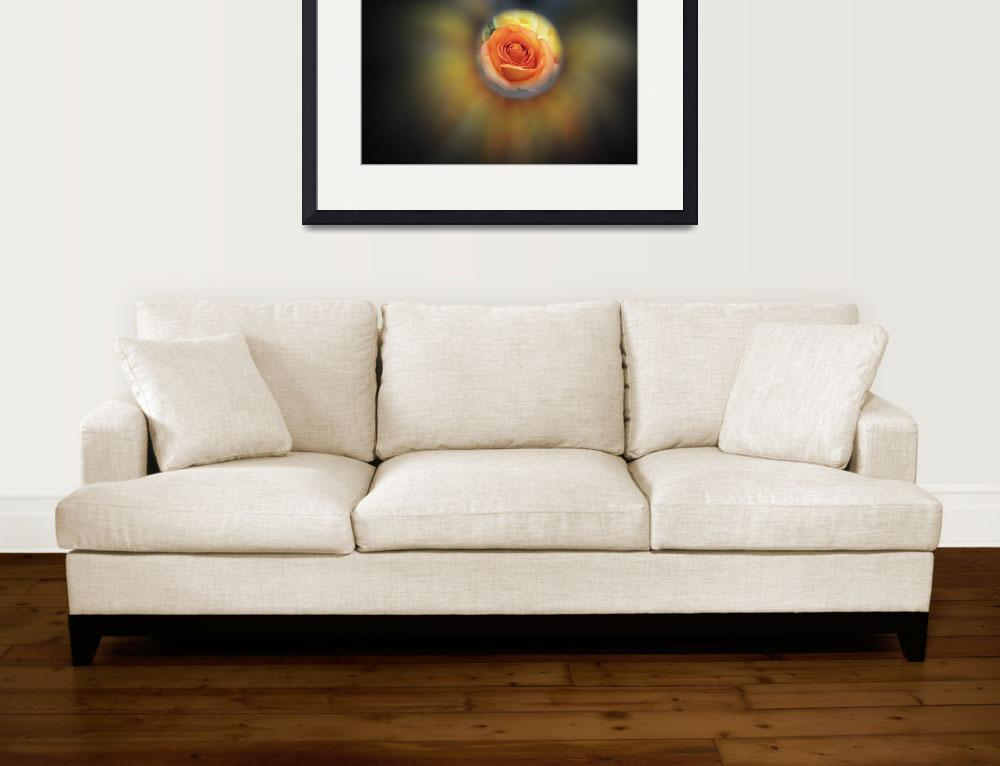 """Golden Glow  Rose&quot  (2012) by Wintercreeks"