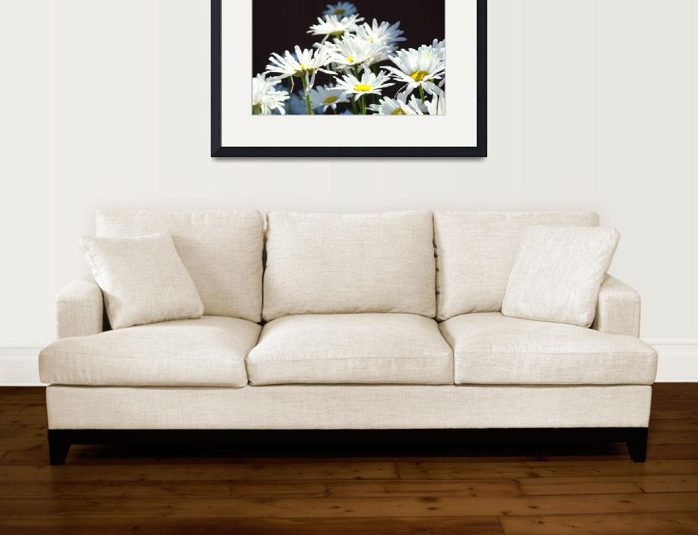 """White Daisy Flowers Floral Art Prints Daisies&quot  (2014) by BasleeTroutman"