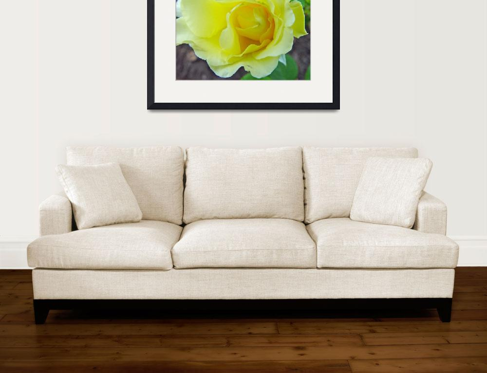 """""""Yellow Rose Off Center&quot  (2010) by bleij50"""