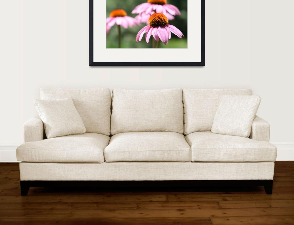 """""""Purple Coneflowers 2&quot  (2011) by kimmerhaw"""