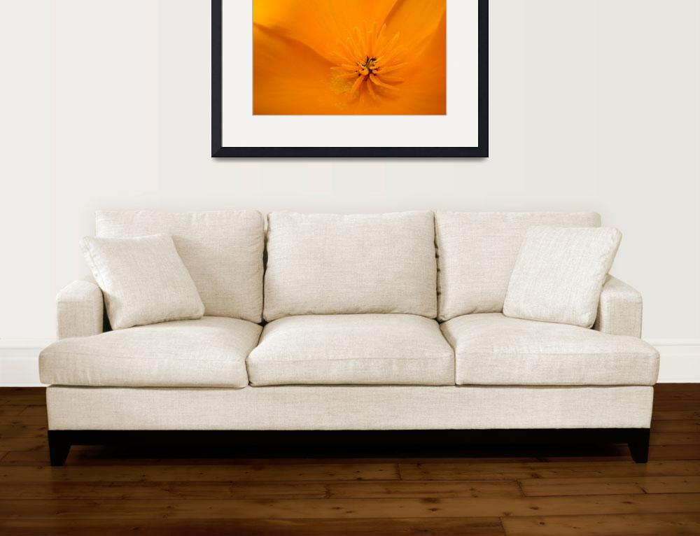 """Macro Wildflower Poppy Flower 6 Floral Art Print&quot  (2009) by BasleeTroutman"