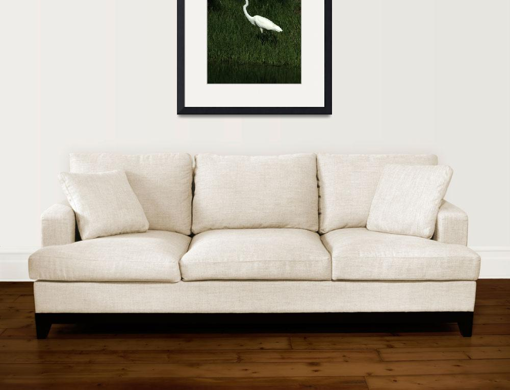 """Great Egret Among Reeds&quot  (2014) by rhamm"