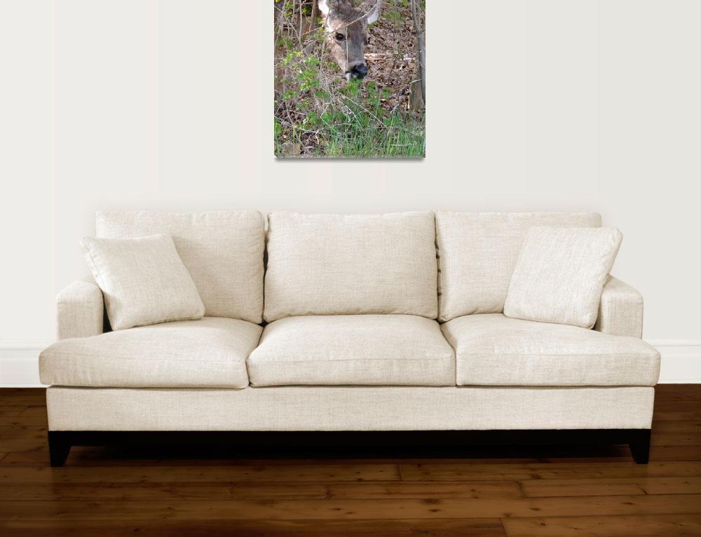 """Deer Capturing Nature Wildlife Photography""  by vpicks"