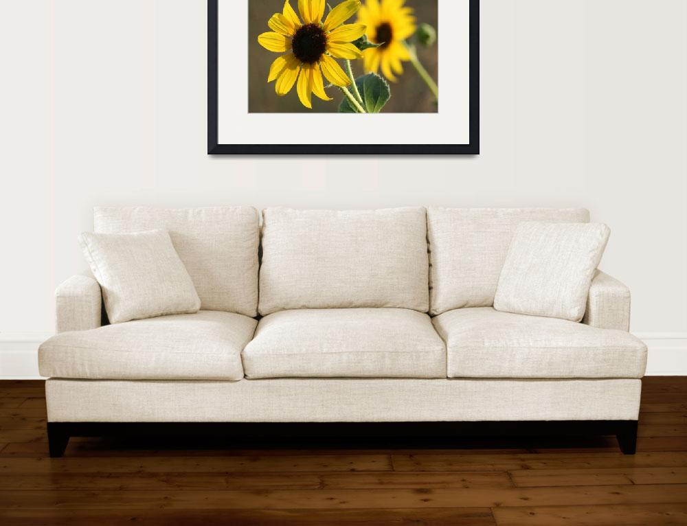 """""""Sun Flowers""""  (2008) by FreddieJohnsonPhotography"""