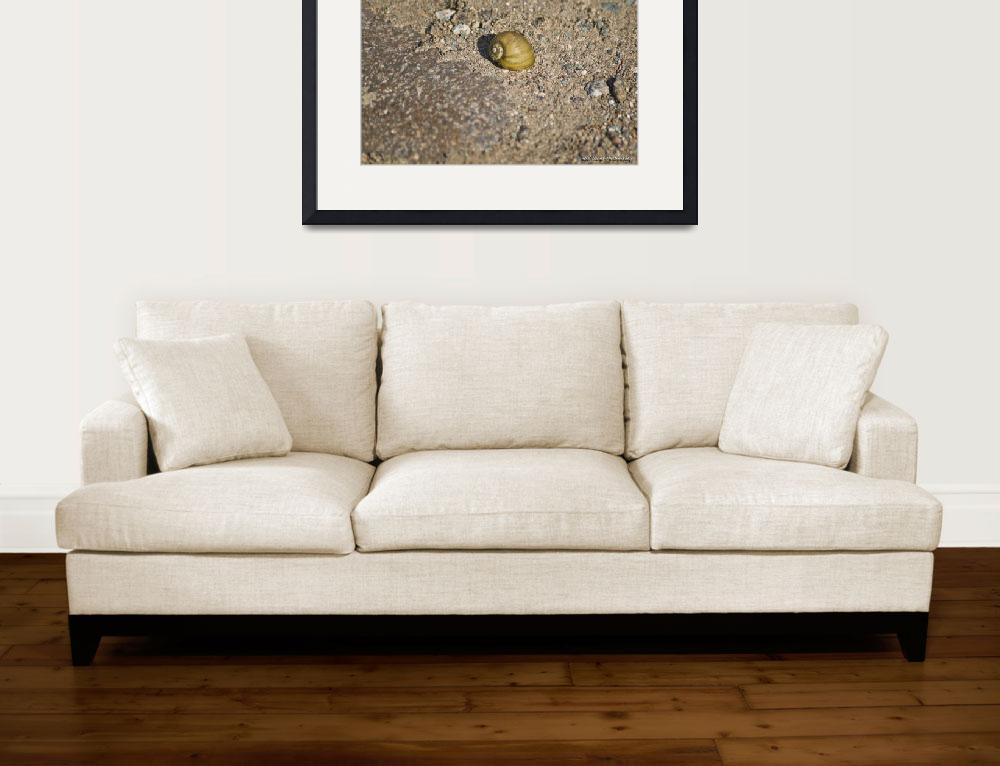 """""""Snail Shell&quot  (2012) by robnelmsphotography"""