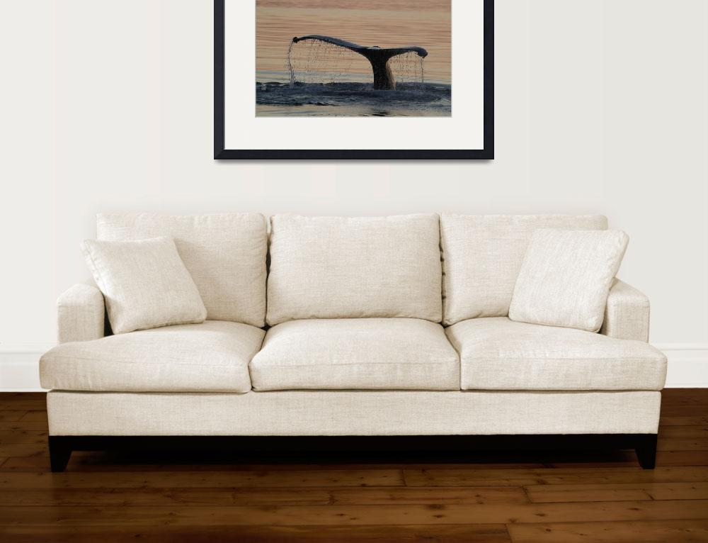"""""""Whale Flukes in Sunset, Alaska""""  (2005) by SederquistPhotography"""