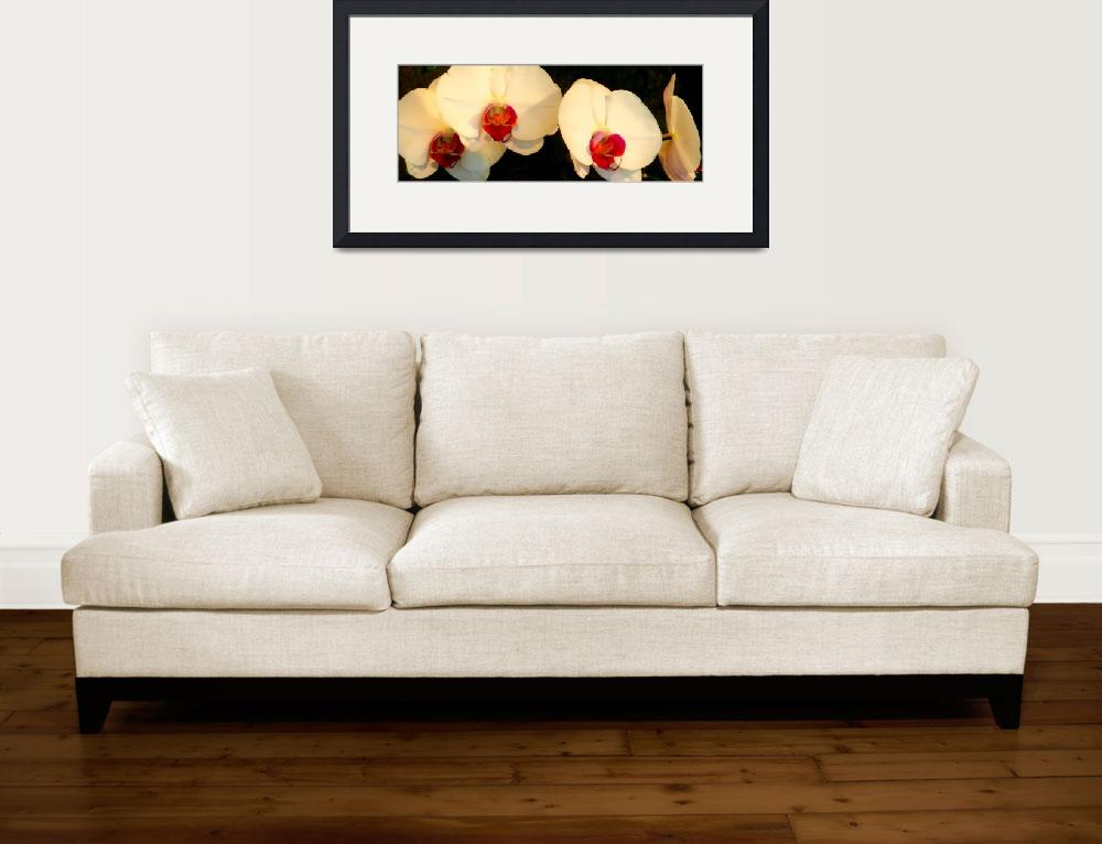 """""""white orchids brushstrokes&quot  by lizmix"""