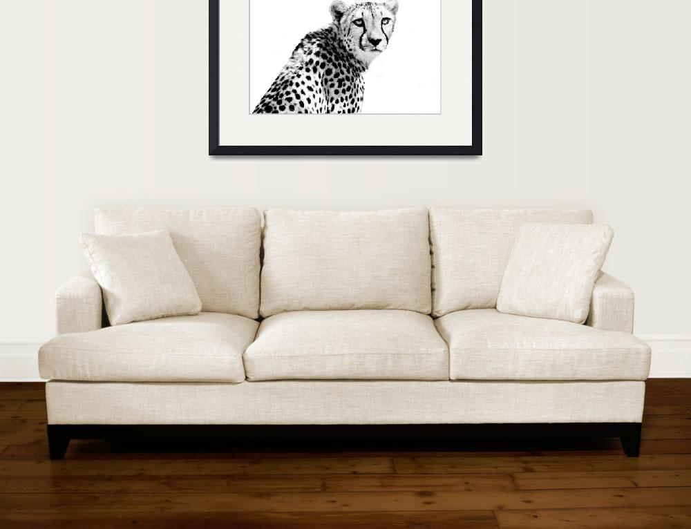 """""""Cheetah I""""  by BethWold"""