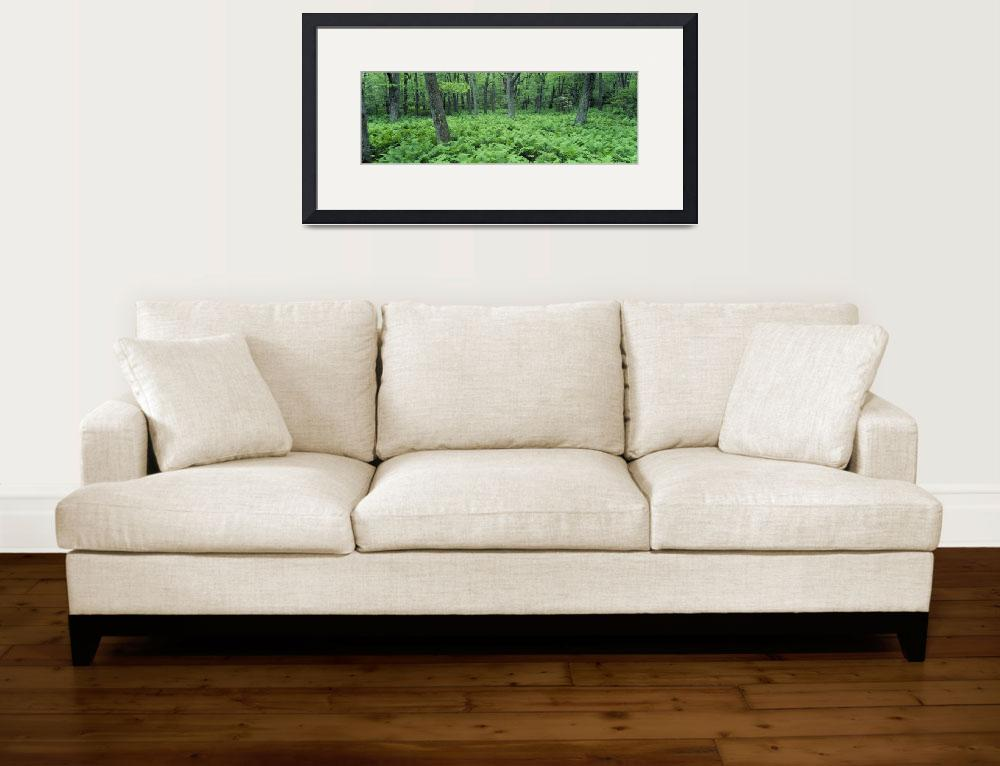 """""""Fern Covered Forest Floor Shenandoah National Par&quot  by Panoramic_Images"""