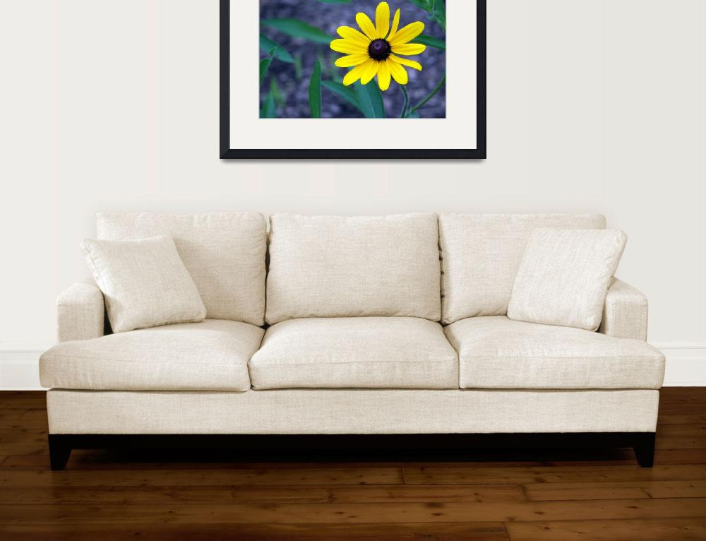 """""""Black Eyed Susan&quot  (2007) by dchristi"""
