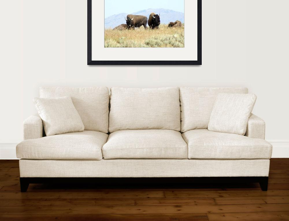 """""""Bison&quot  by Hartphotography"""
