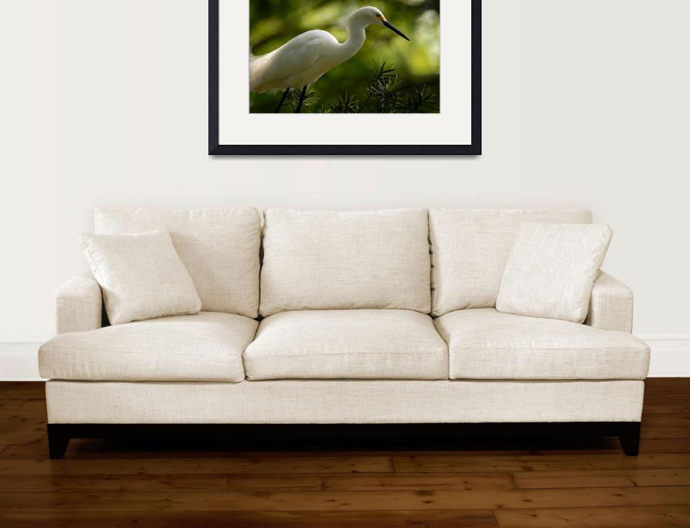 """Snowy_Egret""  (2007) by TBurgess"