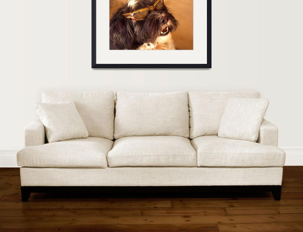 """""""219 Cool Dog&quot  (2010) by willphoto"""
