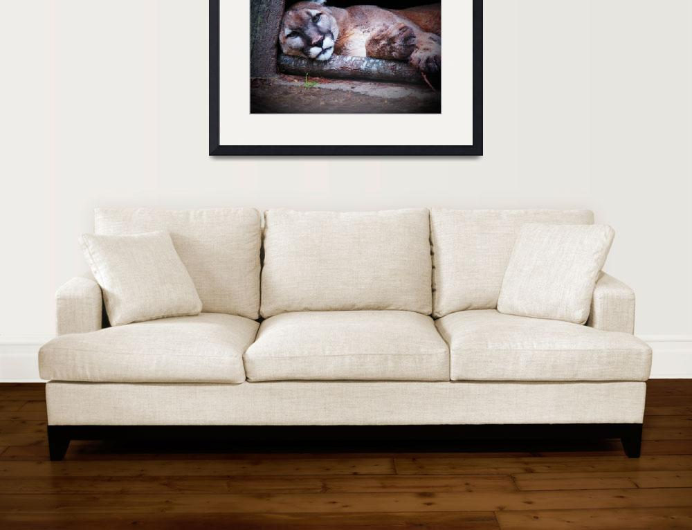 """reclining mountain lion&quot  (2009) by awhoward"