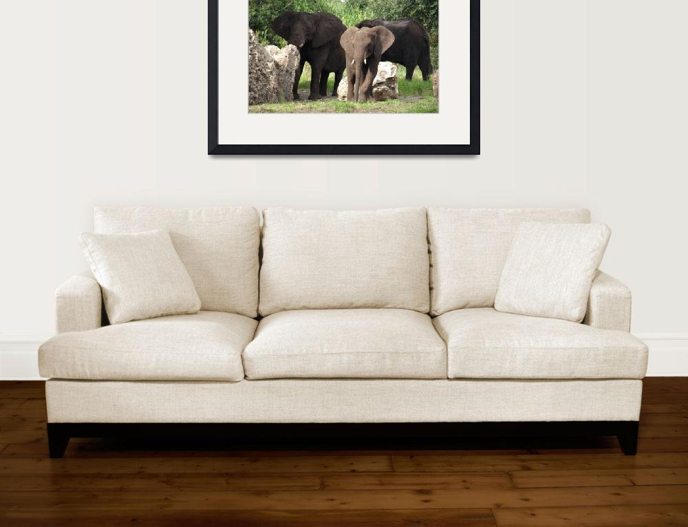 """Elephant family&quot  (2008) by dawnanderson"