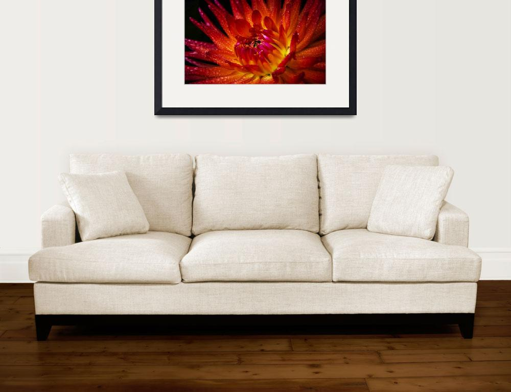 """""""Wildfire Dahlia&quot  (2010) by SoulfulPhotos"""