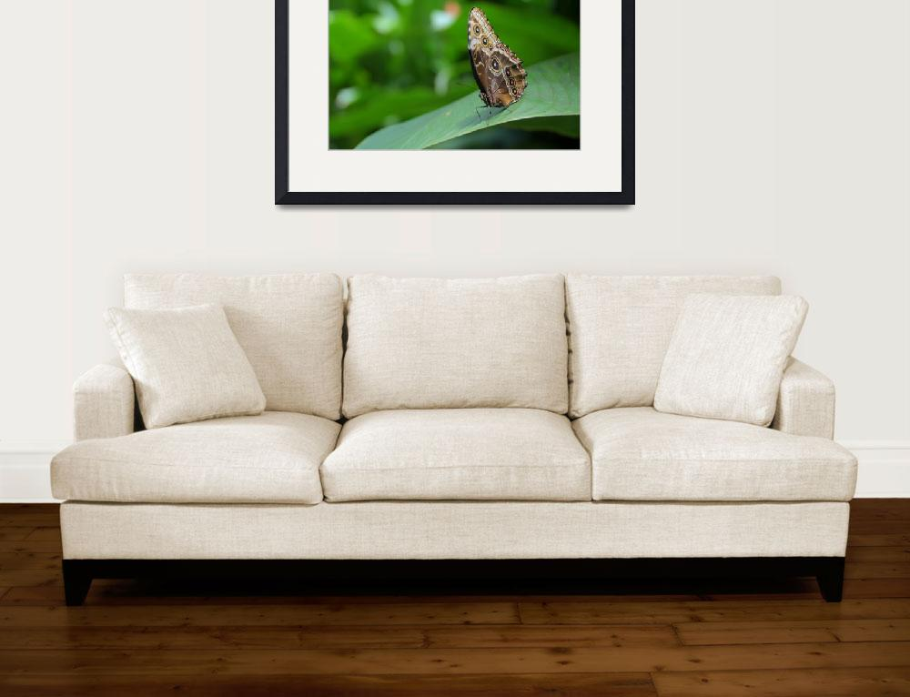 """""""Butterfly and Green&quot  (2011) by b_r1s1n9"""