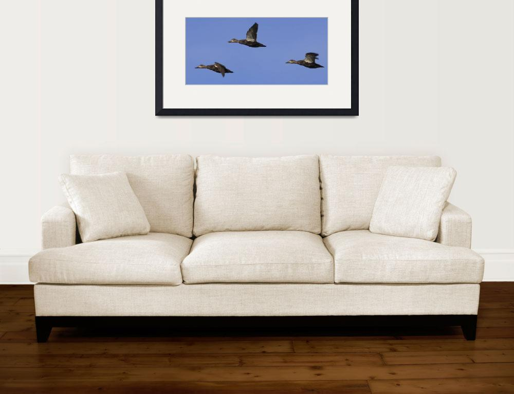 """""""Ducks in a Row&quot  (2009) by Black_White_Photos"""