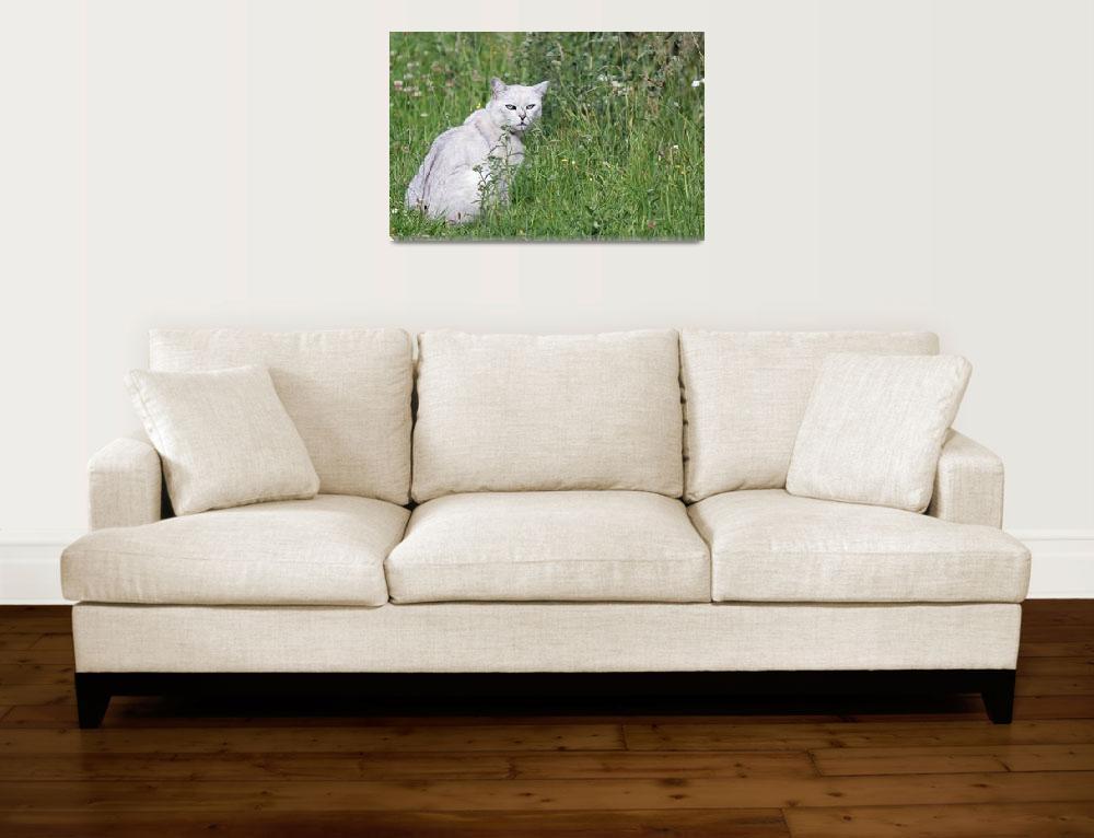"""White Cat""  (2011) by loversdream"