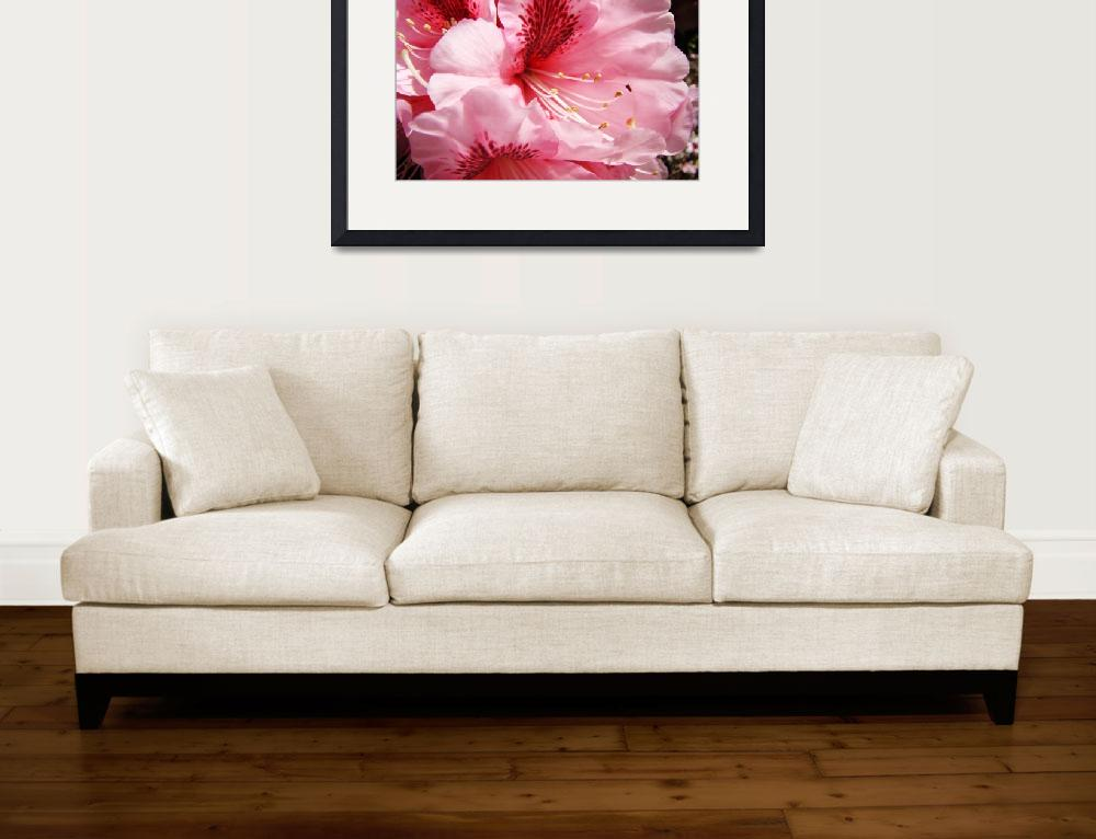 """""""Bright Colorful Pink Rhododendron Flowers art&quot  (2011) by BasleeTroutman"""
